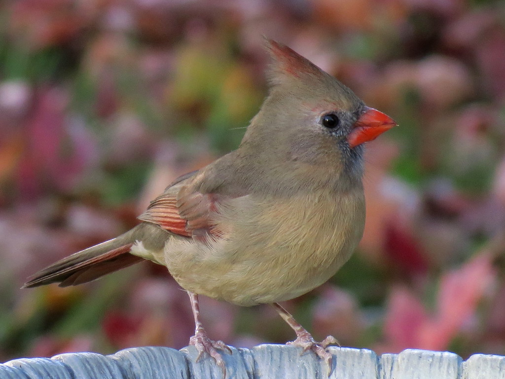 Cardinal on October 28th.