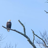 Eagles @ McIntosh Reserve