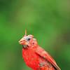 I'm a Pretty Bird!
