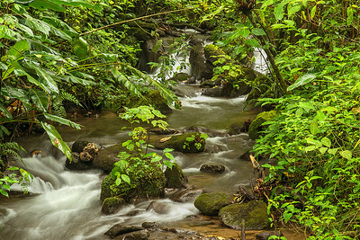 Bill enjoyed composing this beautiful forest stream image in the cloud forest at Bosque de Paz.