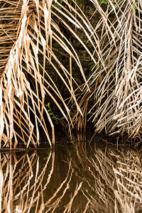 Phyllis captured this striking abstract image of a reflection on the Tortuguero canals.