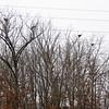 heronrly 5 nests