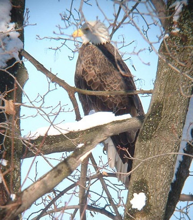 Taken at Lake Rockwell, near Kent, OH, January 2003.  This photo was used on the displays at the Kent Dam Park.