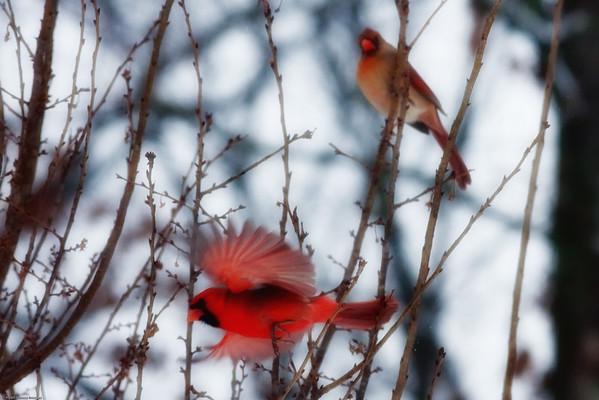 Bird's at Faris House