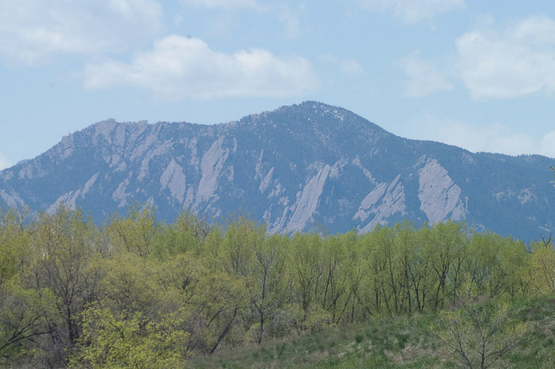 Birdwatching with the Flatirons in the distance