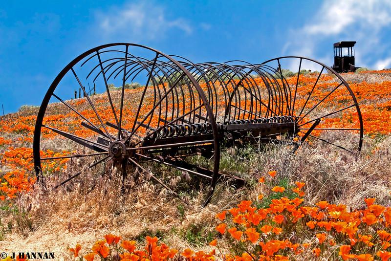 California Poppy fields, old farm equipment, Antelope Valley