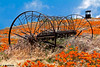 California Poppy fields, old farm equipment, Antelope Valley