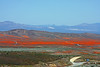 Californai Poppy fields, Antelope Valley  - This view is about ten miles wide