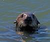 Otter Moss Landing, CA
