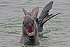 "Elephant Seal, Point Piedras blancas, Central California - for a short video click on <br />  <a href=""http://www.youtube.com/watch?v=9Jy9JYjxza0"">http://www.youtube.com/watch?v=9Jy9JYjxza0</a>"