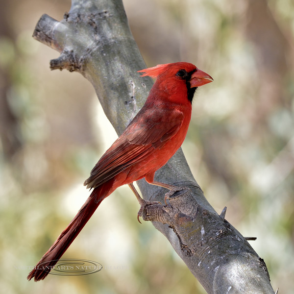 Cardinal, AZ, Northern 2018.5.4#043. Apache Trail, Pinal County, Arizona.