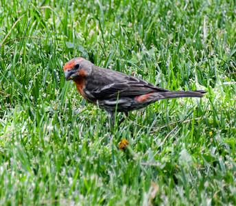 Birds in Backyard 2013