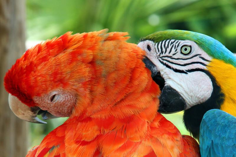 Blue & Yellow Macaw