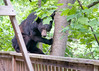 A black bear on my deck.