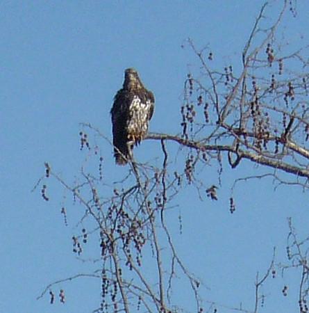 Birds near Lake Hodges