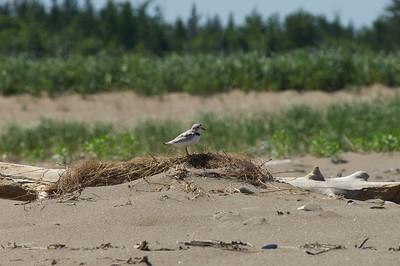 Cap Lumiere Birds, NB 2011