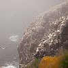 Thousands of Northern Gannets on Rocky Cliffs above the Ocean