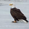 7 Eagle on ice 2