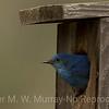 Blue Bird in house
