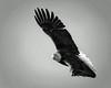 Bald Eagle-7-