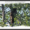 Great Horned Owl - July 2, 2010 - River Bourgeois, Cape Breton, NS
