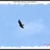 Turkey Vulture - June 24, 2011 - Lower Sackville, NS