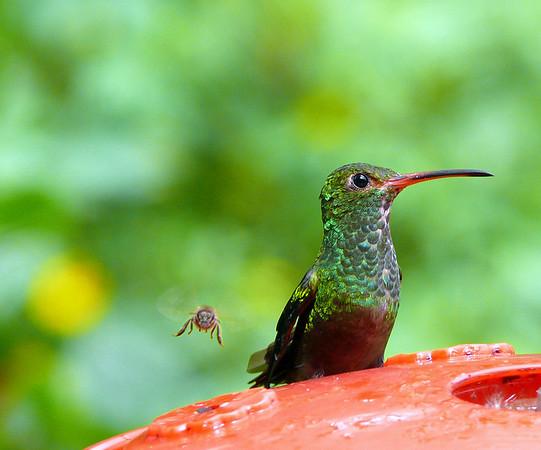 Birds of Tandayapa, Ecuador