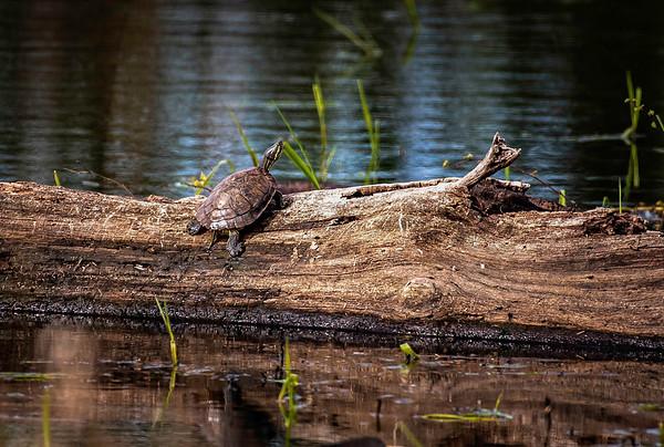 Birds of Tualatin River Wildlife Sanctuary