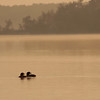 Two Common Loons in the sunset.