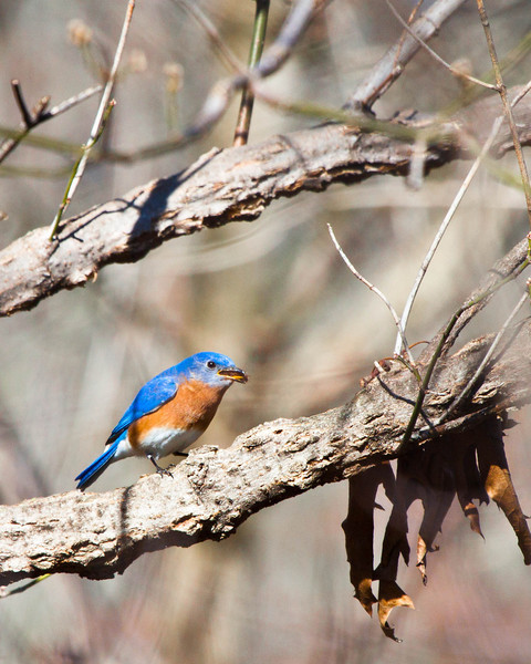 Nature March 2012
