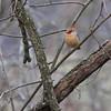 Birds Winter 2012