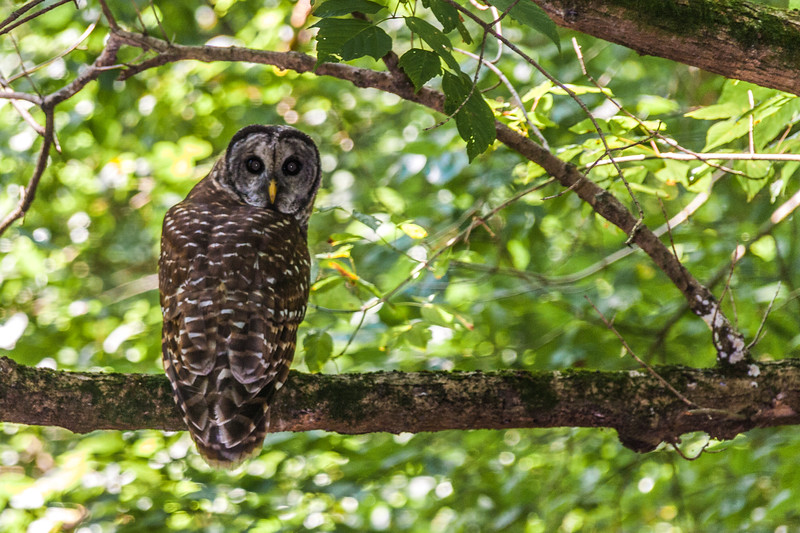In Cherokee Park, Louisville, KY