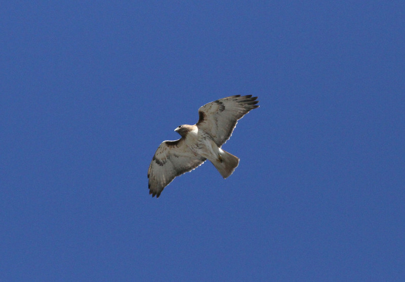 Buzz overhead