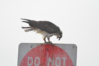 Osprey_Do_Not_Enter_D71_3104