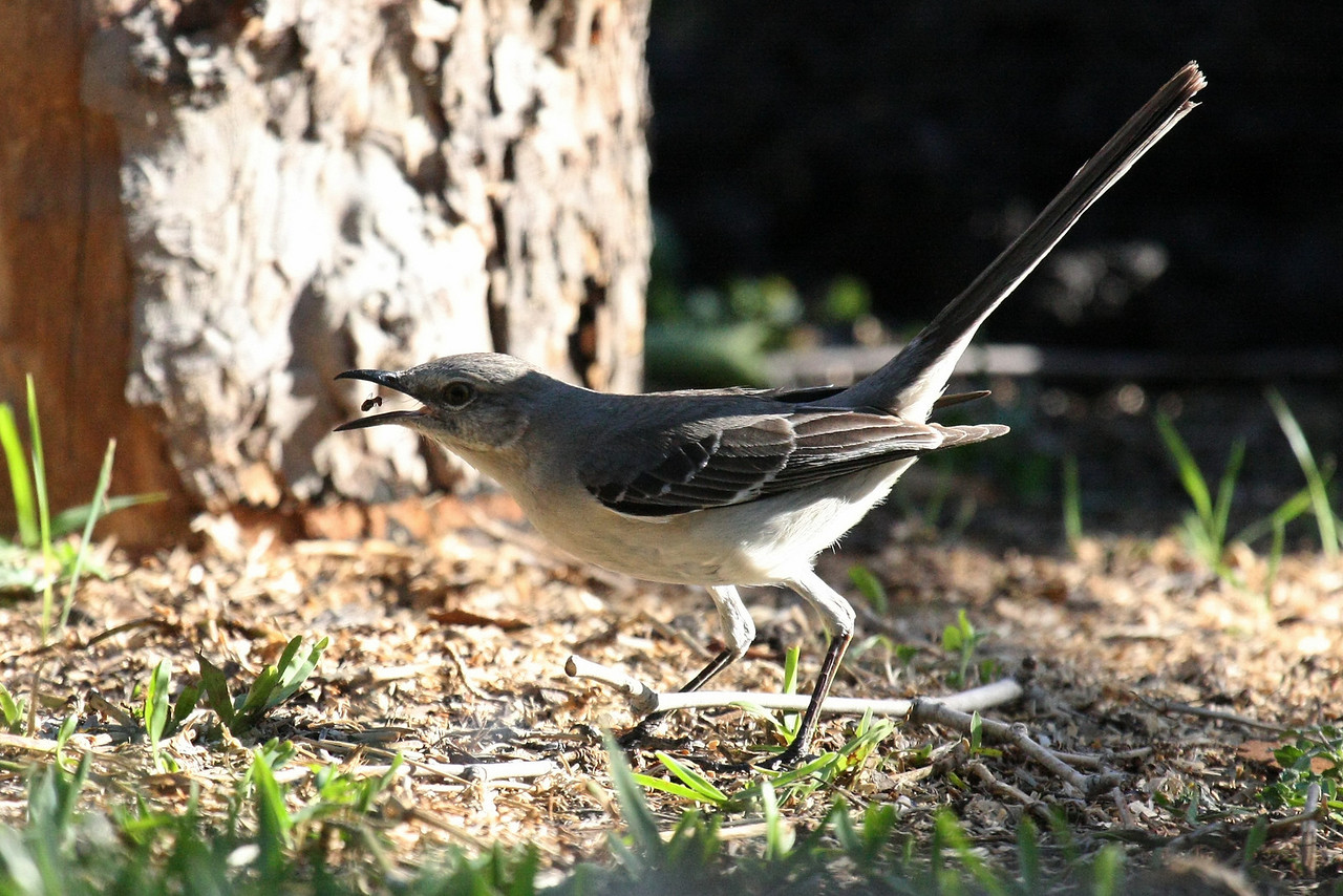 The morsel being tossed in his beak looks to be an ant.  Who woulda thunk it.