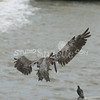 (139) Galveston Island Ferry Ride - Birds