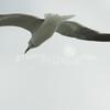 (159) Galveston Island Ferry Ride - Birds