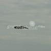 (151) Galveston Island Ferry Ride - Birds