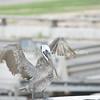 (137) Galveston Island Ferry Ride - Birds