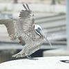 (138) Galveston Island Ferry Ride - Birds