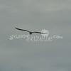 (157) Galveston Island Ferry Ride - Birds
