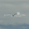 (158) Galveston Island Ferry Ride - Birds