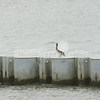 (170) Galveston Island Ferry Ride - Birds