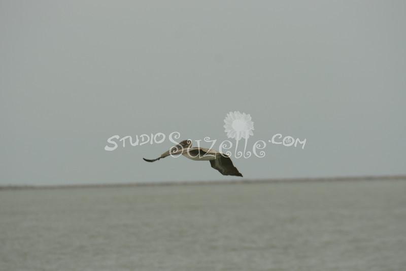 (103) Galveston Island Ferry Ride - Birds