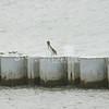 (171) Galveston Island Ferry Ride - Birds