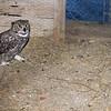 2014, 12-09 Owl100
