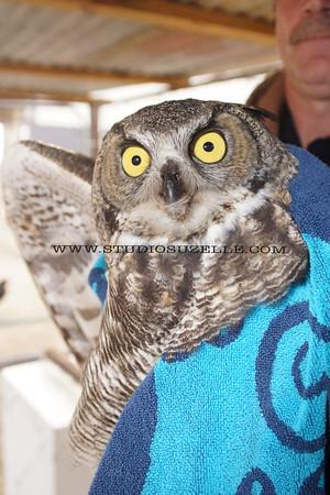 2014 Owl