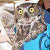 2014, 12-09 Owl139
