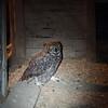 2014, 12-09 Owl105
