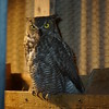 2014, 12-09 Owl119